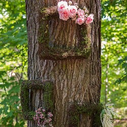 Cadre décoratif végétal