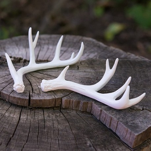 Décoration bois de cerf