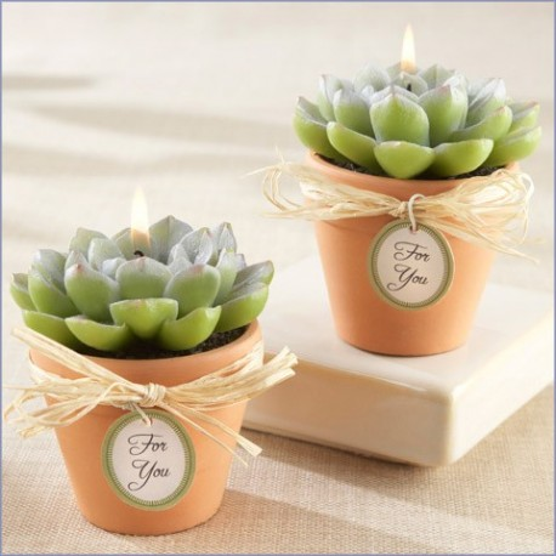 Bougie succulente